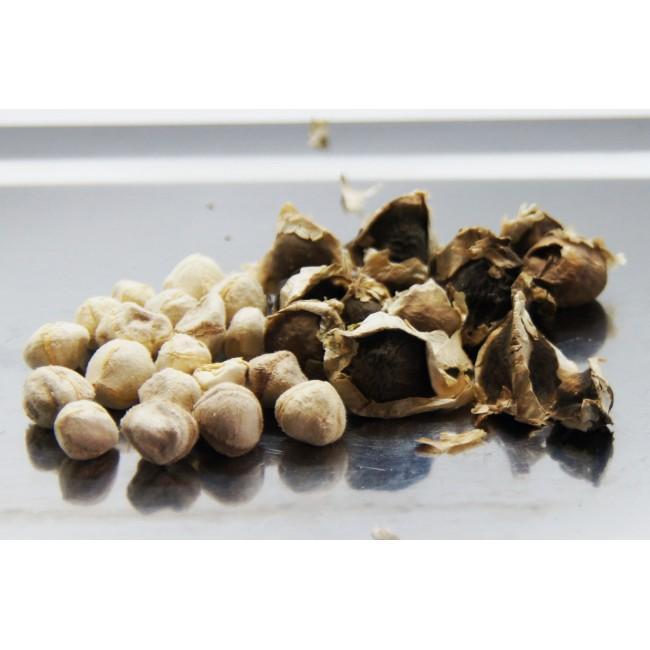 натуральные семени моринги 100 гр.
